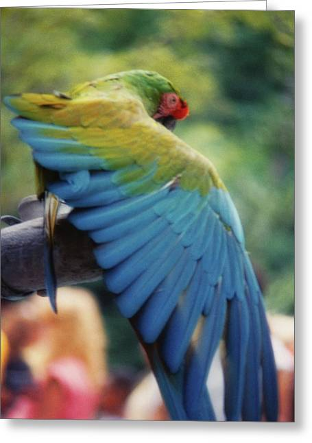 Stretch Your Feathers Greeting Card by JAMART Photography
