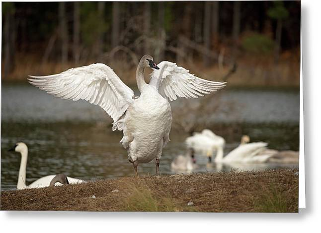 Stretch Your Wings Greeting Card
