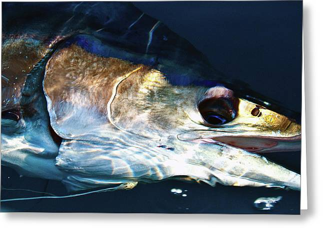 Striped Marlin Greeting Card by Tosh Brown