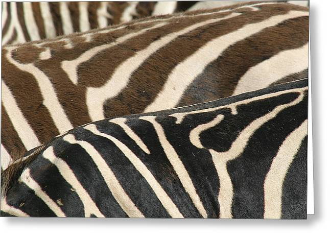 Stripes Greeting Card by Donald Tusa
