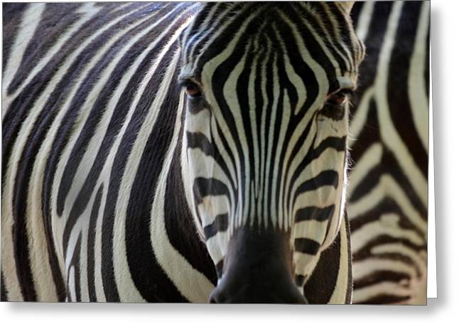 Stripes Greeting Card by Maria Urso