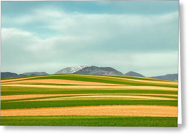 Stripes Of Crops Greeting Card by Todd Klassy