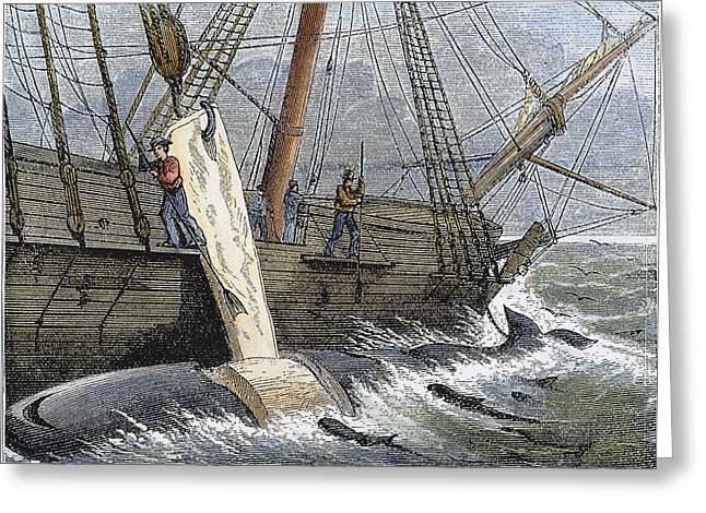 1874 Greeting Cards - Stripping Whale Blubber Greeting Card by Granger