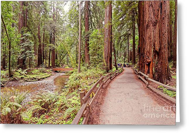 Strolling Along Redwood Creek At Muir Woods National Monument - Mill Valley Marin County California Greeting Card by Silvio Ligutti