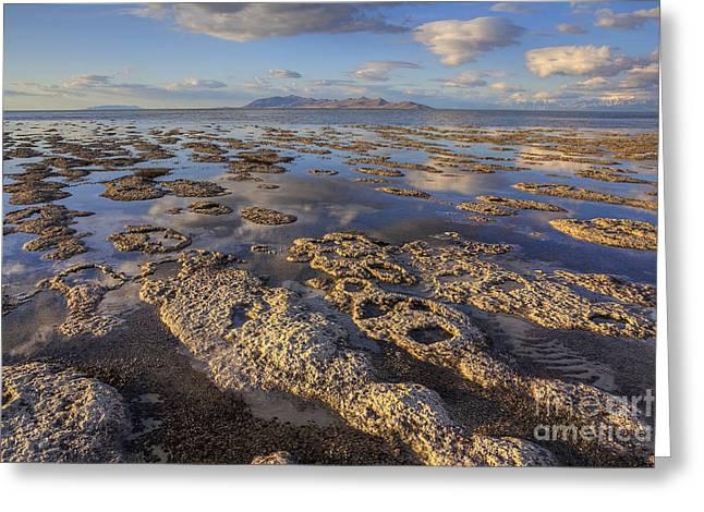 Stromatolites And Antelope Island Greeting Card