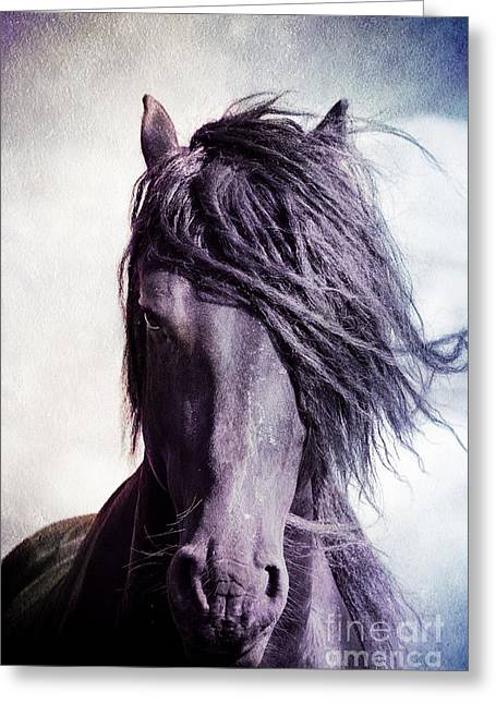 Strong Friesian Stallion Greeting Card by Jan Brons