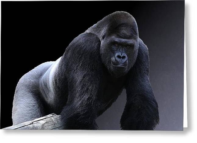 Strong Male Gorilla Greeting Card