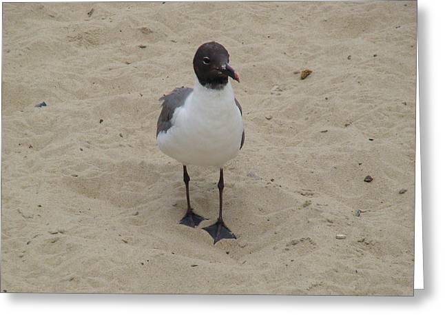 Struttin' Seagull  Greeting Card