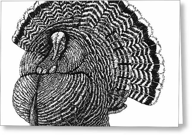 Strutting Gobbler Greeting Card by Suzanne McKee