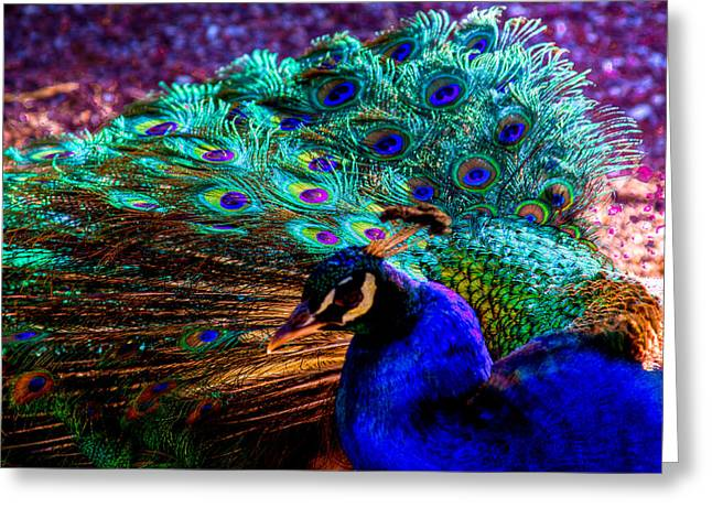 Strutting His Stuff Greeting Card by David Patterson
