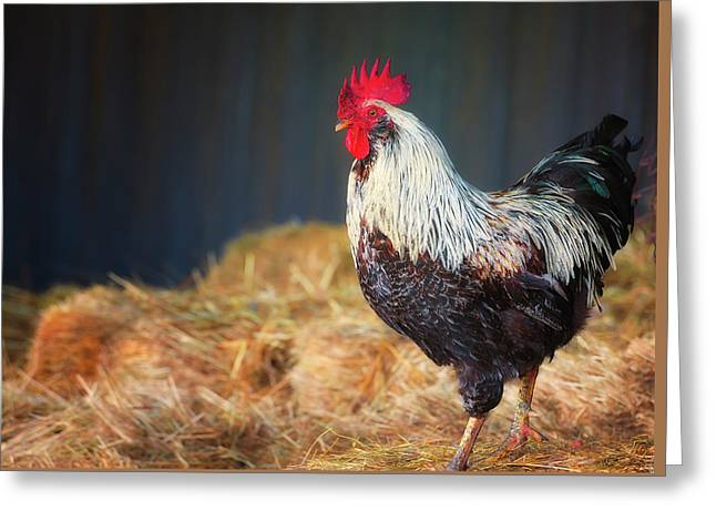 Strutting Rooster Greeting Card