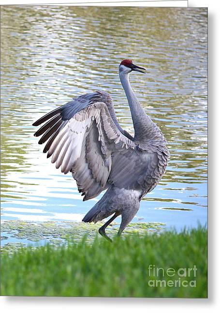 Prancing Bird Greeting Cards - Strutting Sandhill Crane Greeting Card by Carol Groenen