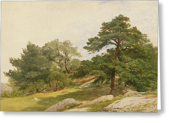 Study For Trees On Beverly Coast Greeting Card by John Frederick Kensett