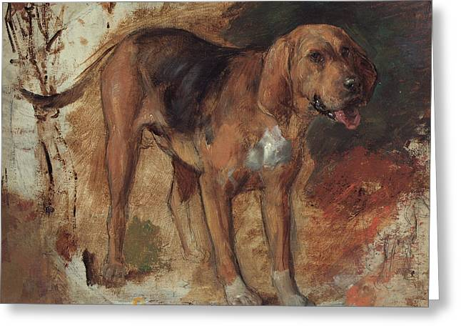 Study Of A Bloodhound Greeting Card