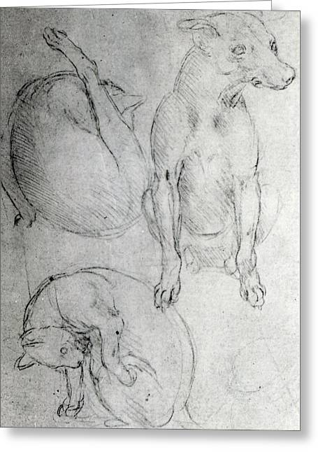 Study Of A Dog And A Cat Greeting Card by Leonardo da Vinci