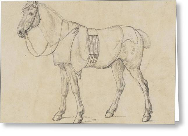 Study Of A Horse Greeting Card by MotionAge Designs