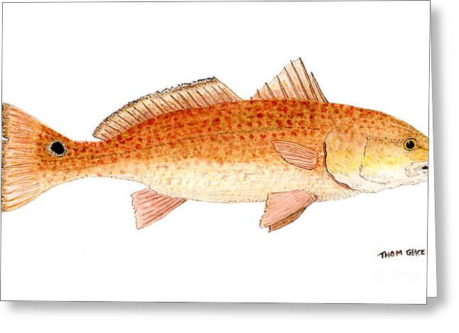 Greeting Card featuring the painting Study Of A Redfish  by Thom Glace