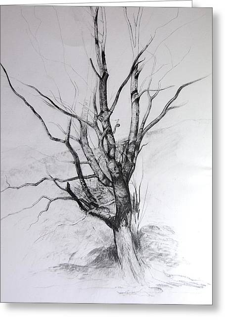 Study Of A Tree Greeting Card by Harry Robertson