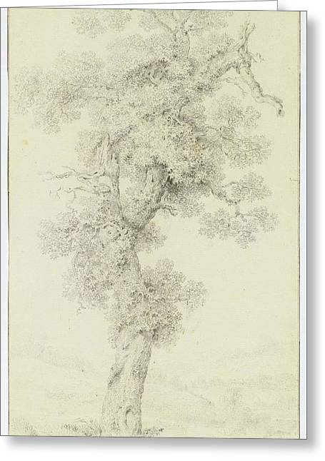 Study Of An Old Tree Greeting Card by MotionAge Designs