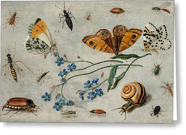 Study Of Insects, Butterflies And A Snail With A Sprig Of Forget-me-nots Greeting Card