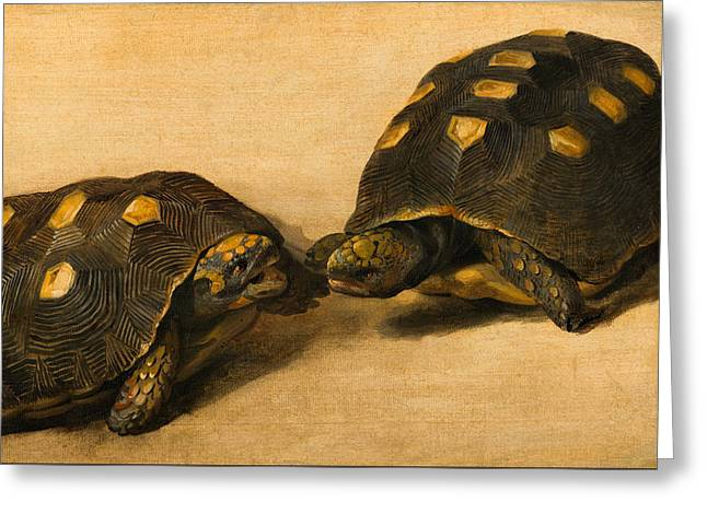 Study Of Two Brazilian Tortoises Greeting Card