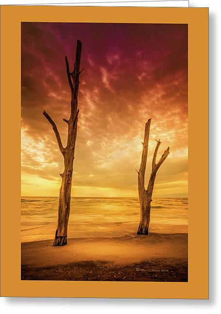 Stump Pass Greeting Card by Marvin Spates