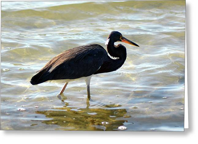 Greeting Card featuring the pyrography Stump Pass Tri Colored Heron by Sally Sperry