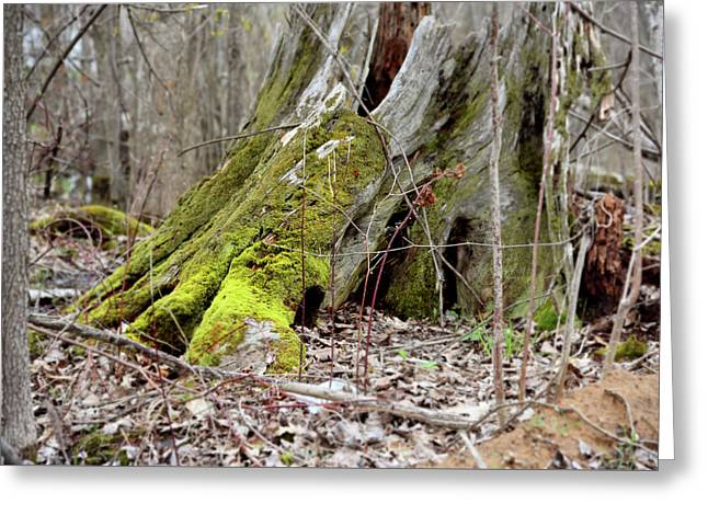 Stump With Moss Greeting Card