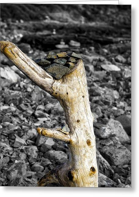 Stump With Rocks - Ogunquit - Maine Greeting Card