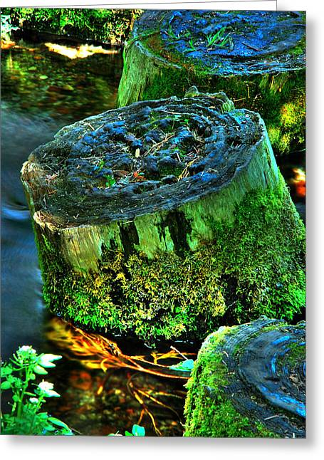 Stumped Greeting Card by Tom Melo