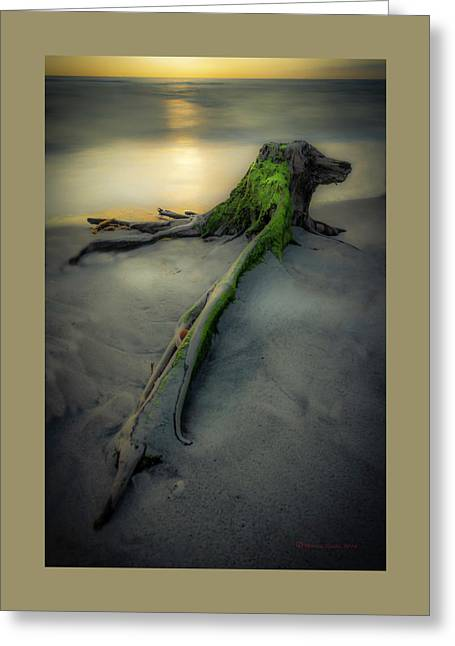 Stumps Edge Greeting Card by Marvin Spates
