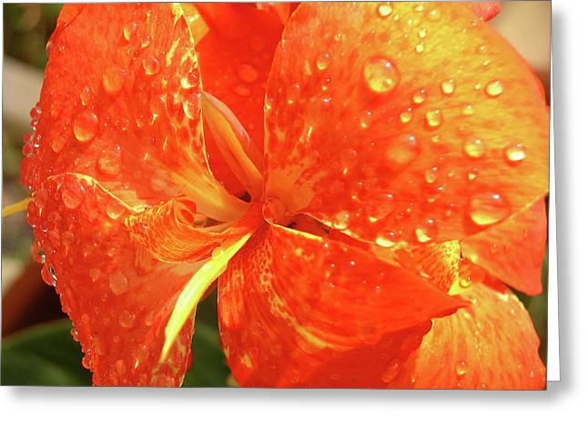 Stunning Canna Lily Greeting Card by Karen Nicholson