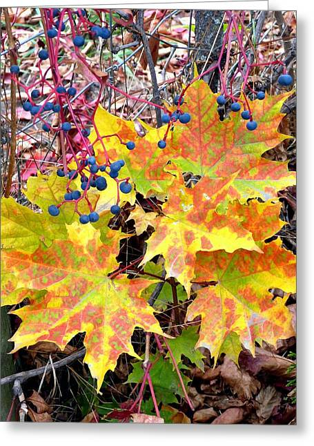Stunning October Greeting Card by Will Borden