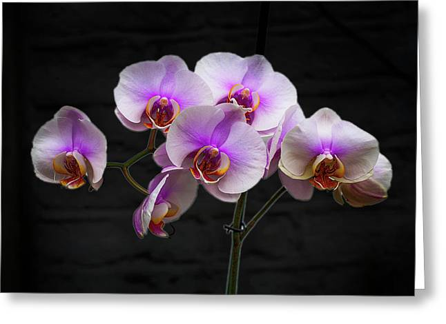 Stunning Pink Orchids Greeting Card by David French