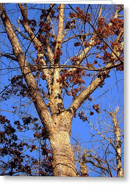 Stunning Tree Greeting Card