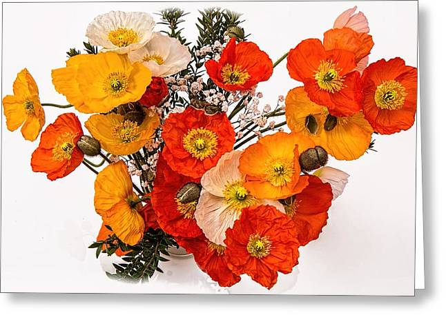 Stunning Vibrant Yellow Orange Poppies  Greeting Card