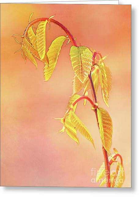 Stylized Baby Chestnut Leaves Greeting Card