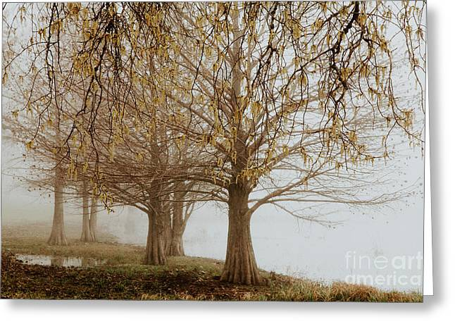 Greeting Card featuring the photograph Sublime by Iris Greenwell