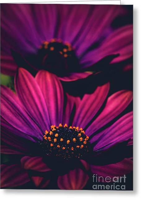Greeting Card featuring the photograph Sublime by Sharon Mau