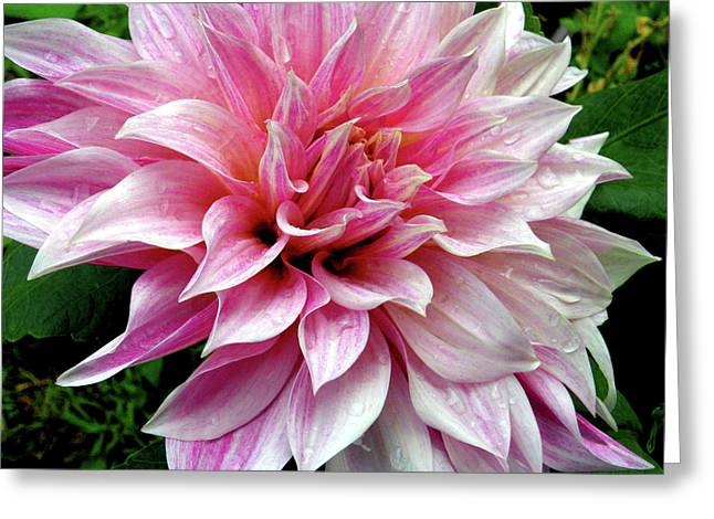 Subtle In Pink Greeting Card by Christine Belt