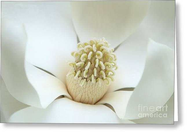 Subtle Southern Magnolia Greeting Card by Carol Groenen