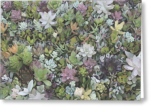 Succulent 8 Greeting Card