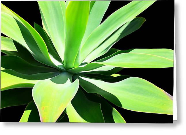 Succulent Agave Art By Sharon Cummings Greeting Card by Sharon Cummings