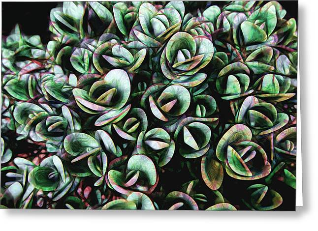 Succulent Fantasy Greeting Card by Ann Powell