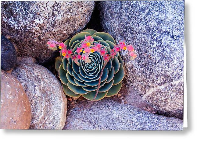Succulent Flowers Greeting Card