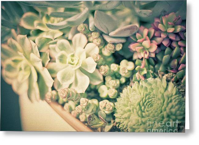 Greeting Card featuring the photograph Succulent Garden by Ana V Ramirez
