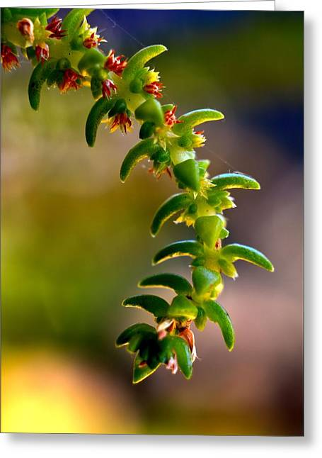 Succulent Hanging Greeting Card by Josephine Buschman