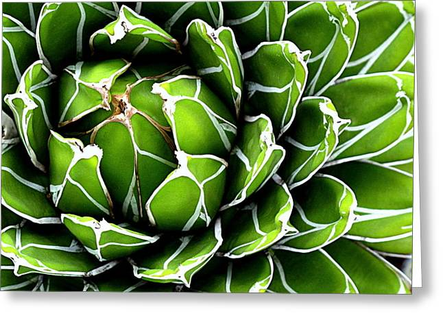 Succulent In Color Greeting Card by Ranjini Kandasamy