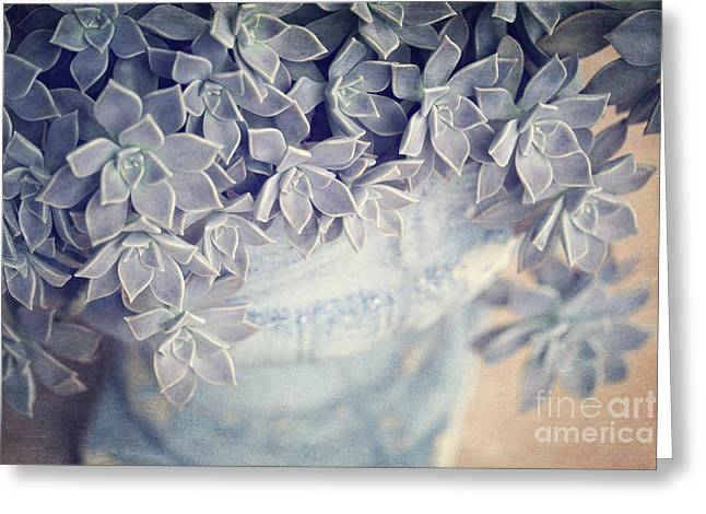 Succulent Love Greeting Card by Joan McCool