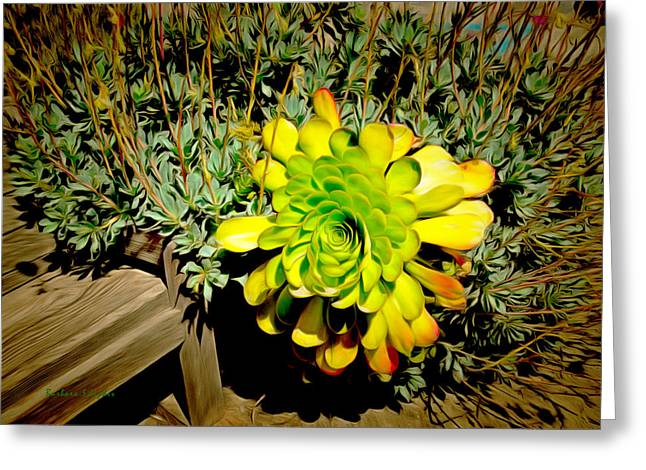 Succulent Study Greeting Card by Barbara Snyder